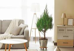 Küçük odaları nasıl dekore edebiliriz
