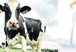 Süt piyasası 'toz' duman