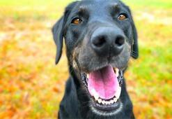 Köpeklere tuvalet eğitimi nasıl verilir