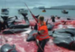 Japon balıkçılar Antartikada 333 balinayı öldürdü