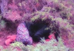 Kayıp kadın orman baygın halde bulundu