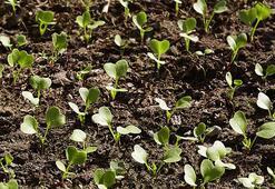Hangi sebze hangi ayda ekilir Havuç, bezelye, ıspanak, domates, turp, patates, soğan... ne zaman ekilir