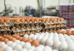 Avrupaya 6 yıl sonra yumurta ihracatı