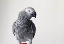 Papağanlı davada  karar