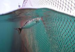 Bir belgesel bir balığın soyunu kurtarabilir mi - PembeNar Özel Röportaj
