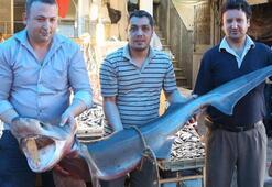 Mersin'de 3 metrelik köpek balığı yakalandı