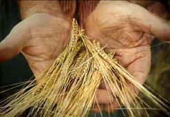 Çiftçilere tarım destekleri belli oldu