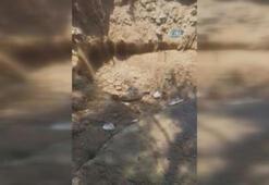 Bodrumda halk plajında korkutan görüntü