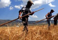 Genç çiftçiye hibe desteğinde son gün Perşembe