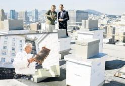 Arılara  otel  desteği