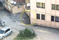 Bursa'daki o evde  1.5 kilo bonzai