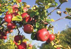 Migros bira değil elma, armut için