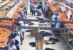 Belediye, mandalin işleme tesisi aldı