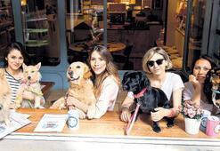 Evcil dostlarınızla takılacağınız kafe