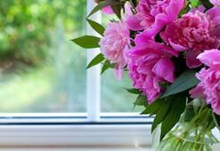Hangi Bitkiler Baharı Sever