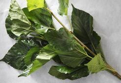 Dut yaprağının faydaları