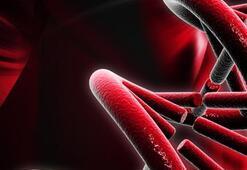 Bebeğin kromozom yapısı anne kanında belirlenecek