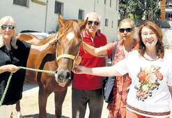 'Yarış atları kaçak  yollarla kesiliyor'