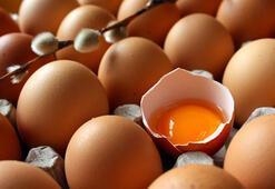 Türk yumurtası 19 ülkeye ihraç edildi