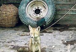 Hayvan tacirlerine   520 bin TL ceza