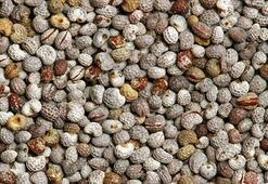 Acı çehre tohumu nedir, nasıl kullanılır