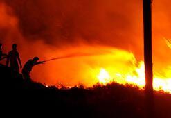 In Bodrum ist ein Gebiet von 250 Hektar abgebrannt