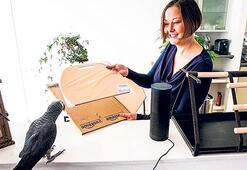 Papağan internetten sipariş verdi