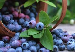 Fazla antioksidan alımı hücresel yaşlanmayı hızlandırabilir