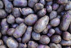 Mor patatesin faydalarına bir yenisi eklendi