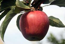 Sağlık için üç ceviz, bir elma