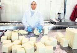 Yunan fetasına rakip: Ezine peyniri