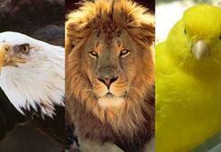 """Bizde """"aslan, kaplan"""", onlarda """"eşek, uçan eşek"""""""