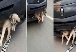 Pendikte akıl almaz olay Tampona sıkışan yaralı köpekle...