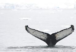 Antarktika hayali gerçekleşti