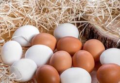 Yumurta fiyatları rekor kırdı