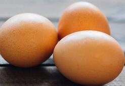 Bilim adamları kanser ile savaşan yumurta geliştirdi