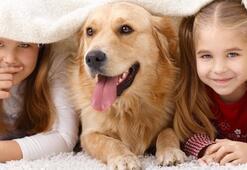 Çocuğunuza hayvan almadan önce bir kez daha düşünün