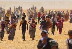 Dünya Gıda Günü göç temasıyla kutlanacak