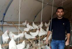 İstanbuldan memleketine döndü, yumurta üreticisi oldu