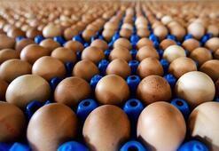 Yumurtalar yeni kodlarıyla piyasaya sunuluyor