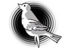 Kuş çocuk ve cehalet cephesi