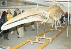 Fuarda bir balina iskeleti