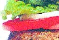 Hamburger ve kola