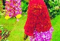 İngiltere çiçek açtı