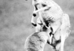 Timsah ve kanguru dinen uygun mu