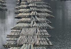 Hindistanın bambu işçileri