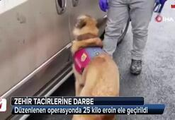 Jandarma köpeği Ataktan zehir tacirlerine darbe