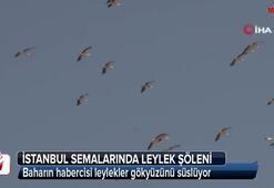 İstanbul semalarında leylek şöleni