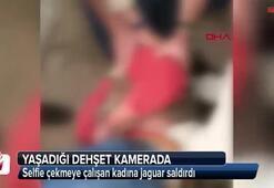 Selfie çekmeye çalışan kadına jaguar saldırdı