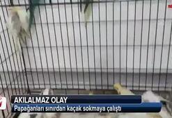Papağanları sınırdan kaçak sokmaya çalıştı